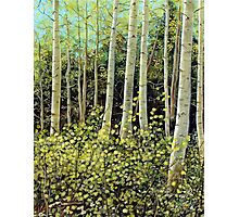 In the Aspens Photographic Print