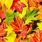 Autumn Leaves by Christina Rollo