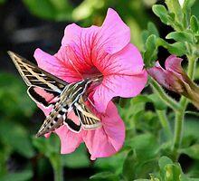 Hummingbird Moth by littlecritters