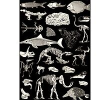 Paleontology Illustration Photographic Print