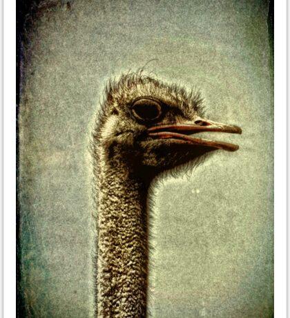 Ostrich Emu   Sticker