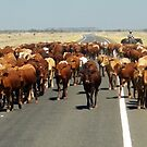 Cattle Country by V1mage