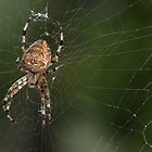 Weave me a Web by Lin Taylor