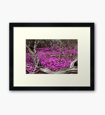 Wildflower Wonder II Framed Print