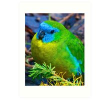 Turquoise Parrot Art Print