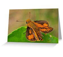 Dart (Potanthus sp.) Greeting Card