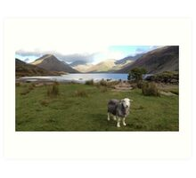 Wast Water with a Herdwick Sheep Art Print