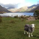 Wast Water with a Herdwick Sheep by GeorgeOne