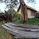 Hill Station Canberra 8mm #6 by Tom McDonnell