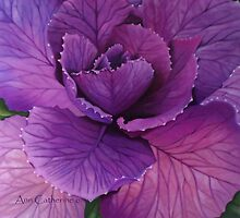 Beautiful Brassica by AnnSkelly