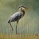 Great Blue At The Beach by Lois  Bryan