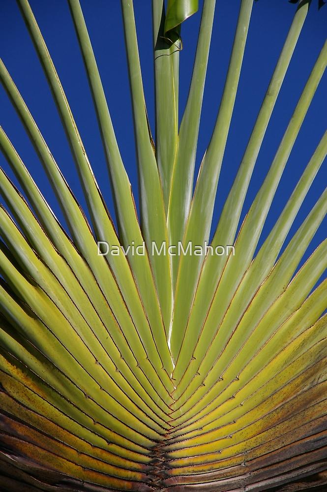 Palm Sunday by David McMahon
