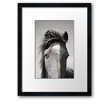 BW Horse #2  Framed Print
