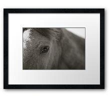 BW Horse #3 Framed Print