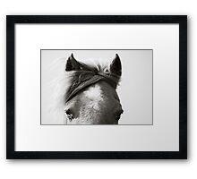 BW Horse #4  Framed Print