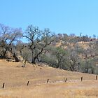 California yellow dry mountain land and trees by naturematters