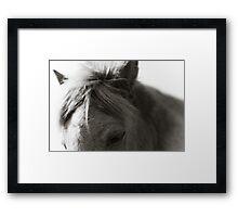 BW Horse #5 Framed Print