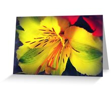 Alstroemeria  - Peruvian Lily Greeting Card