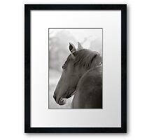 BW Horse #9  Framed Print