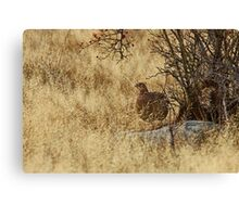 Amongst The Grass Canvas Print