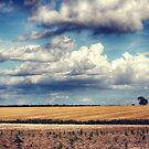 Clouds on a Saturday by Vicki Field