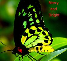 Merry n Bright by andy  king