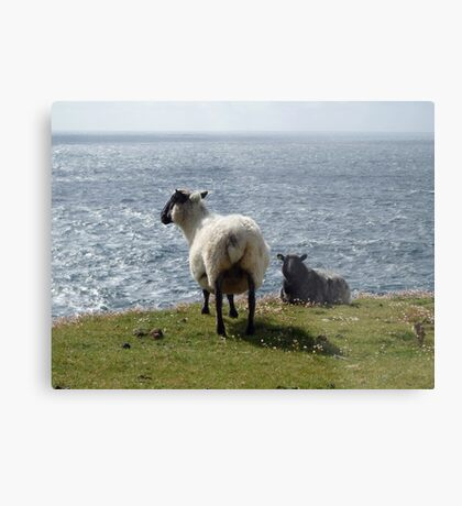 Sheep at Arranmore, Donegal Metal Print