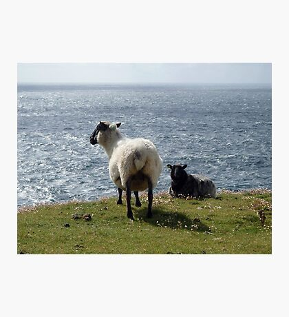 Sheep at Arranmore, Donegal Photographic Print