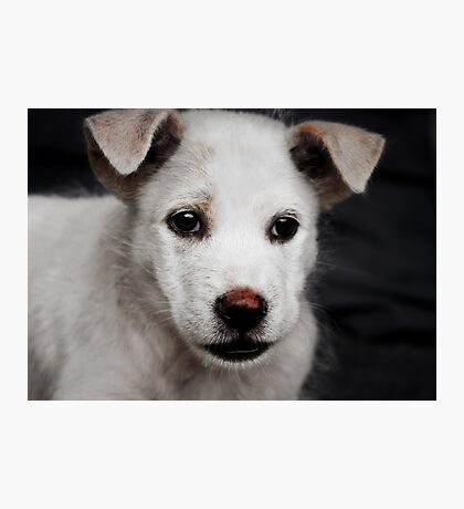 Sad Puppy Photographic Print