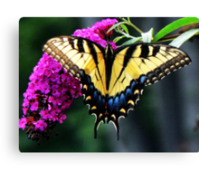 #140 Tiger Swallowtail On Butterfly Bush Canvas Print