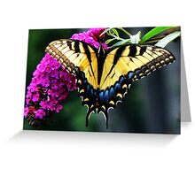 #140 Tiger Swallowtail On Butterfly Bush Greeting Card