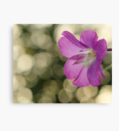 Pink Hairy Willow Herb Canvas Print