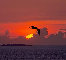 L'oiseau de feu by Jean-Luc Rollier