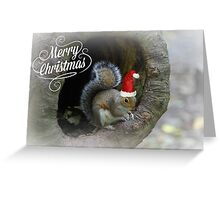 Merry Christmas Squirrel Greeting Card
