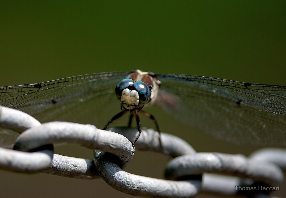 Dragonfly on a Chain by TJ Baccari Photography