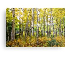 Colorado Backcountry Forest Metal Print