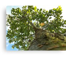 look up 2 the sky Canvas Print