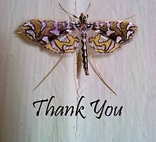 Thank you - nature by eleventimes