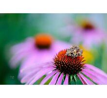 Leap Flower Photographic Print