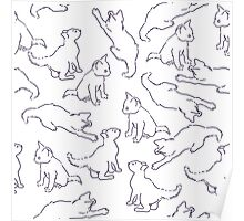 Kitty playing on white Poster