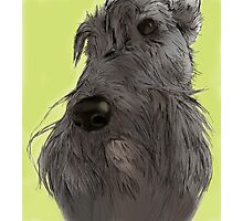 Scottish Terrier sketch Photographic Print