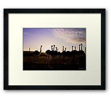 Ostrich silhouette Framed Print