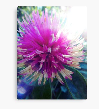 Macro Pink Flower Photography Canvas Print