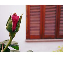 No Rose is JUST a Rose... Photographic Print