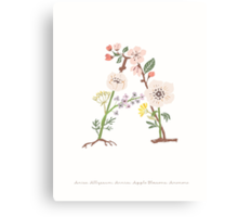 Botanical Letters A Canvas Print