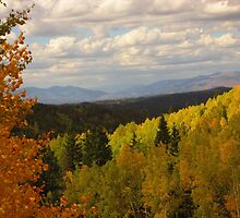 Autumn Colors On the Road to Cripple Creek by dfrahm