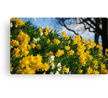 For Wordsworth Canvas Print