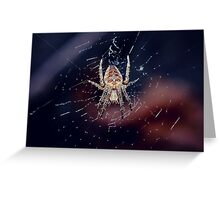 Cross Orbweaver  Greeting Card