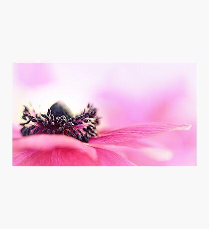Precious Pink... Photographic Print