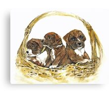 Boxer Basket Canvas Print